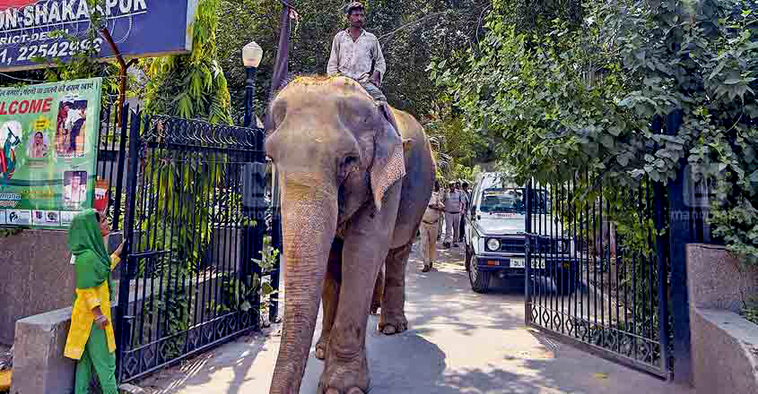 Elephant Lakshmi