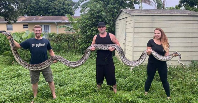 18.9-foot Burmese python caught in Florida Everglades sets record