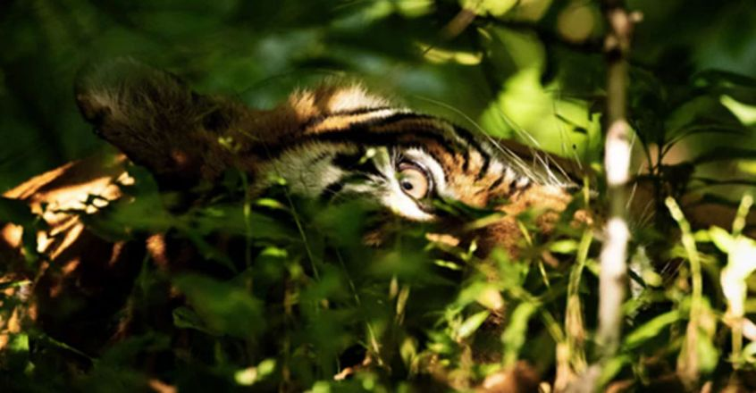 Can You Spy The Tiger With Your Little Eye In Pic Shared By Priyanka Gandhi's Son?