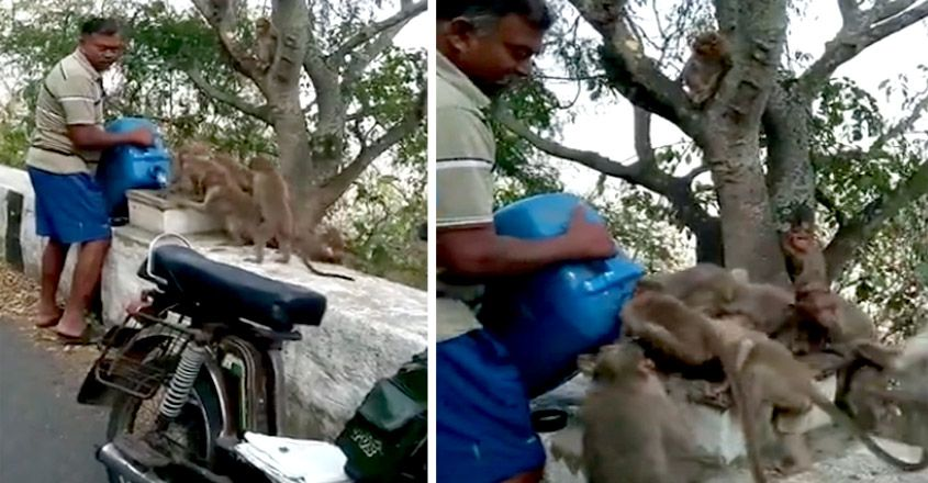 Man provides water for parched monkeys in south India