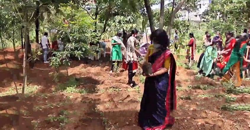  Miyawaki Afforestation Method to create a dense forest in Kochi