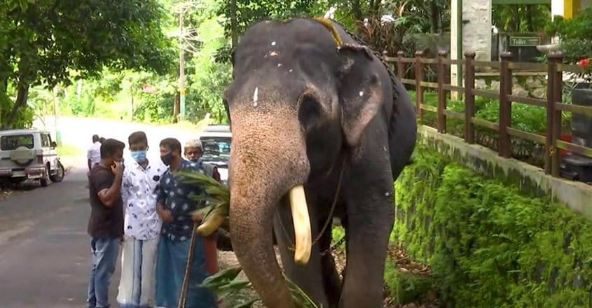 State Government of Kerala to Provide Free Food Kits to Captive Elephants