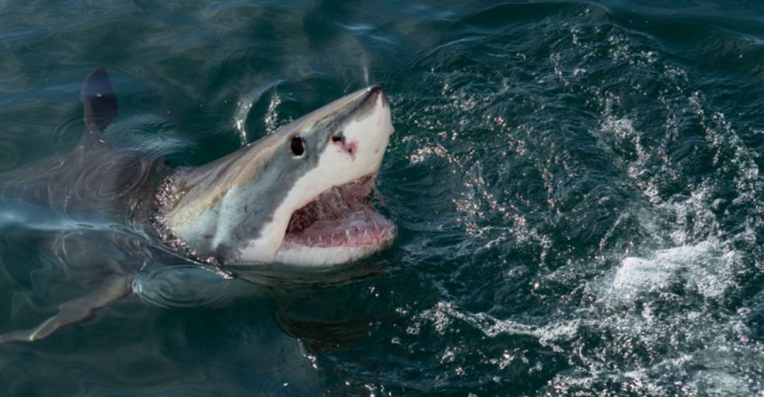Young woman, 19, mauled to death by Great White Shark while out swimming with friends