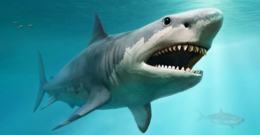 Megalodon Shark Babies Were Cannibalistic, As Large As Basketball Players Inside Wombs