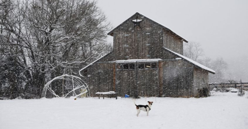 Pets are being left to freeze to death in Texas as their owners leave them outside alone