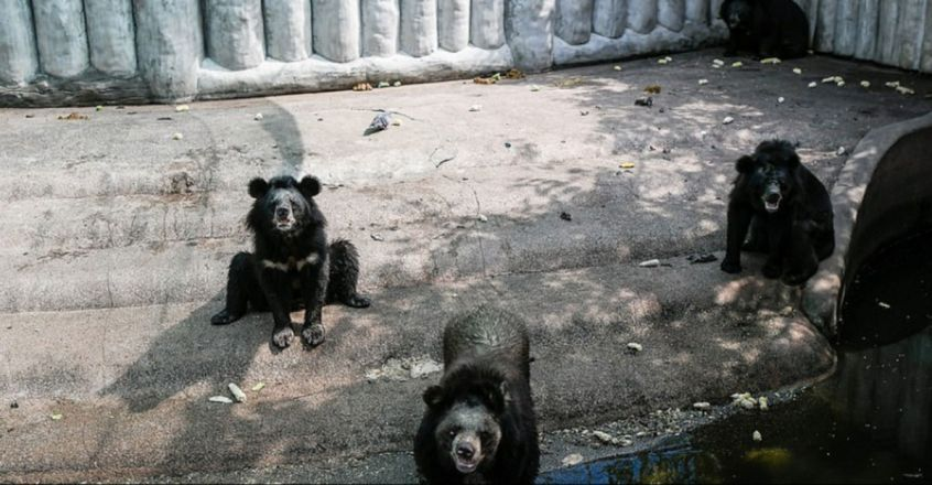 Bears beg tourists for food at Thai zoo declared 'hell on Earth for animals'