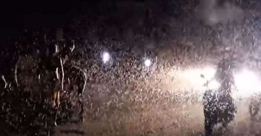 Thousands of insects swarm Karimnagar-Hyderabad highway, cause traffic jam