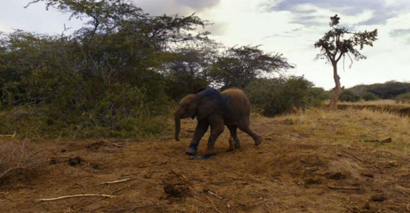 baby-elephant-rescued-from-snare-by-kenyan-wildlife-team1