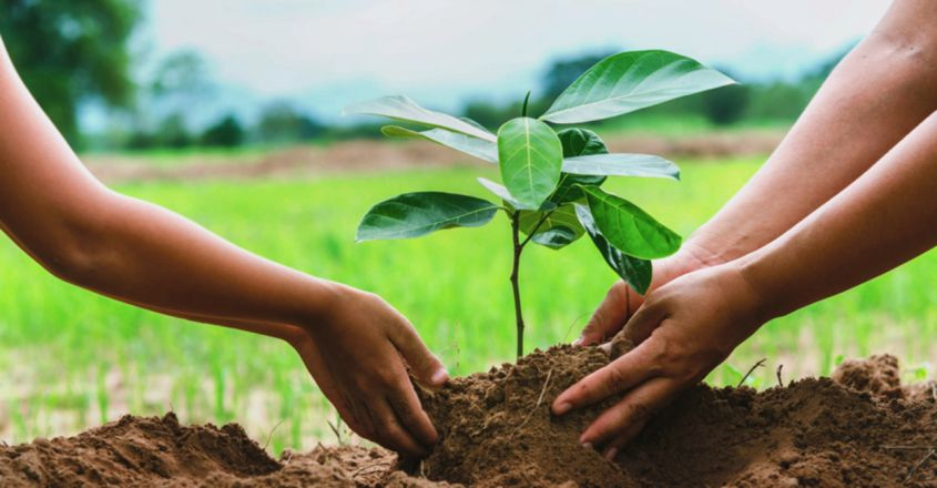 green-revolution-by-a-physics-teacher-to-spread-the-idea-of-seed-balls1