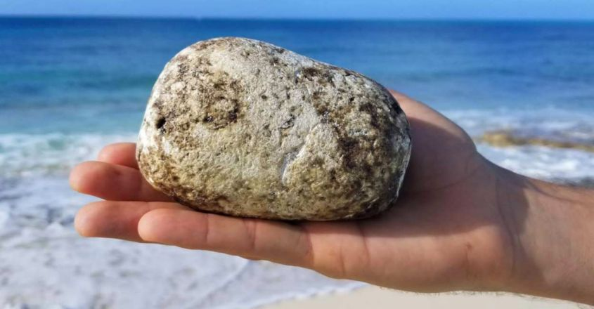 Ambergris in Reality is Whale Poop and Why it is So Valuable?