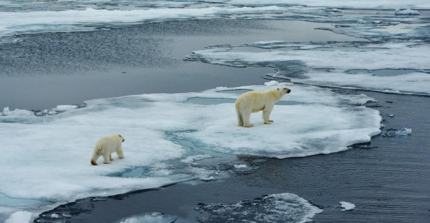 Dozens of polar bears stranded outside Russian Arctic village