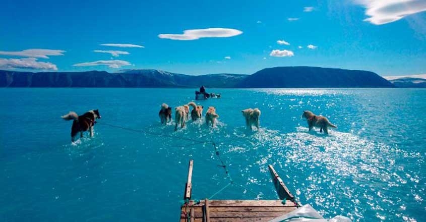 Sled dogs run through meltwater in northwestern Greenland