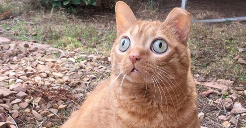 Cat with huge eyes takes internet by storm