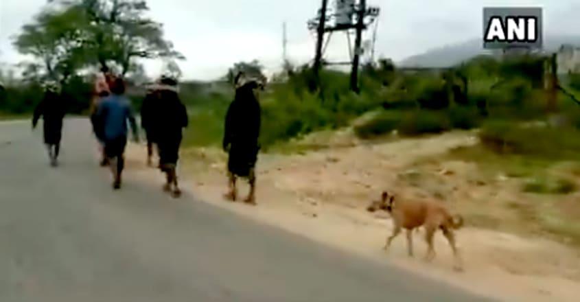 Stray dog walks over 480kms with 13 devotees to Sabarimala