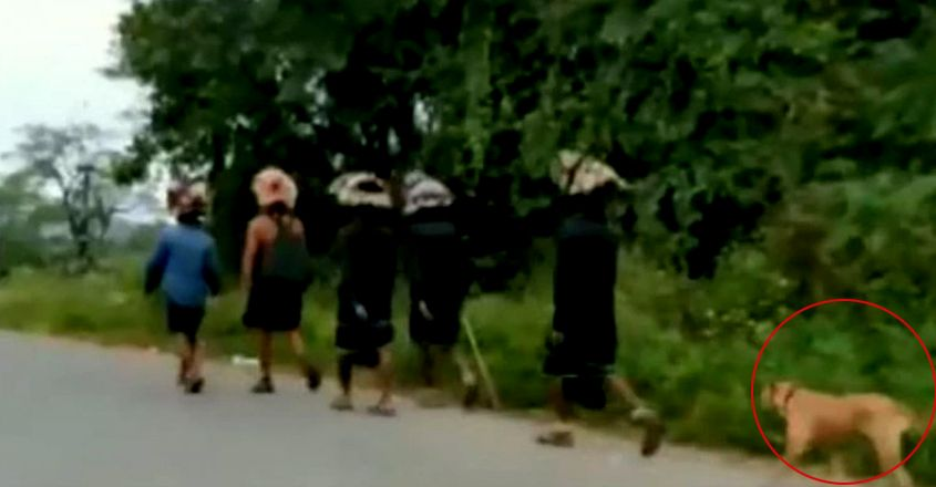 Stray dog walks over 480kms with 13 devotees to Sabarimala