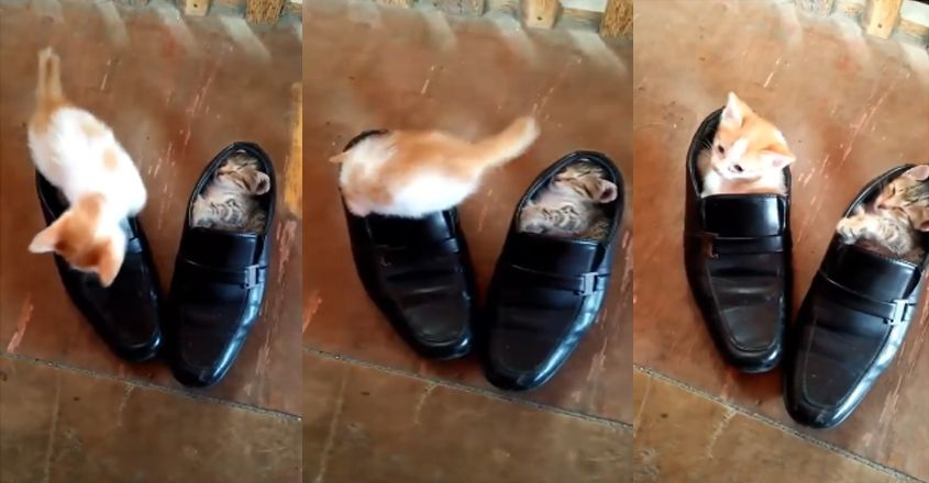 urious kittens become literal 'pusses in boots