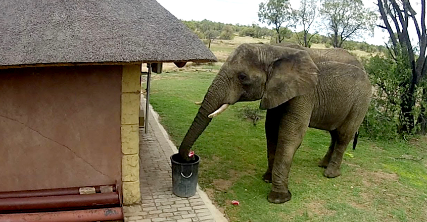 Elephant Collects And Bins Trash