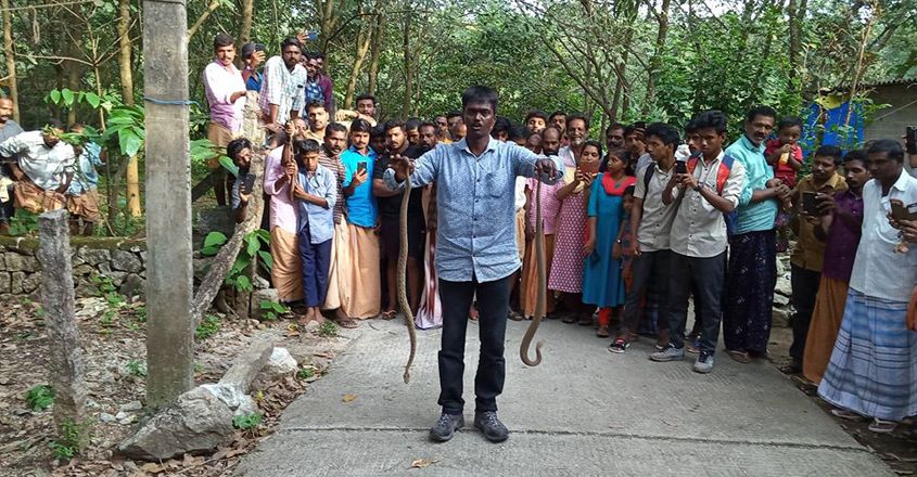 Vava Suresh Rescuing two  vipers in kollam