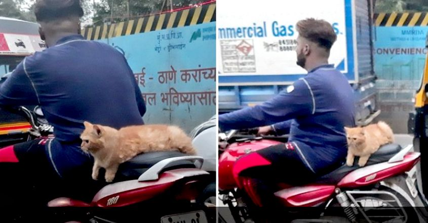 Cat Spotted Riding Pillion on Bike on Mumbai Streets