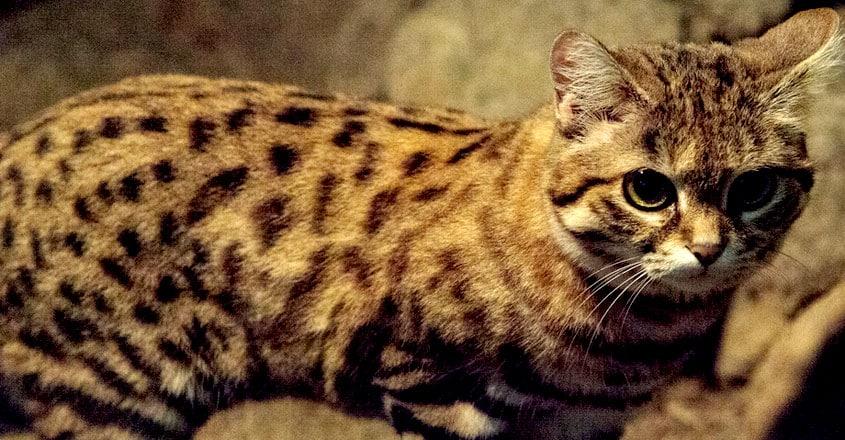 World's Deadliest Cat