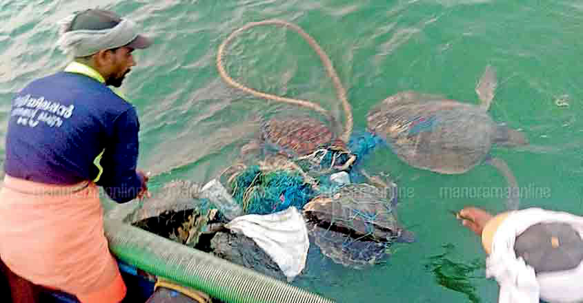 Fishermen rescued trapped sea turtles