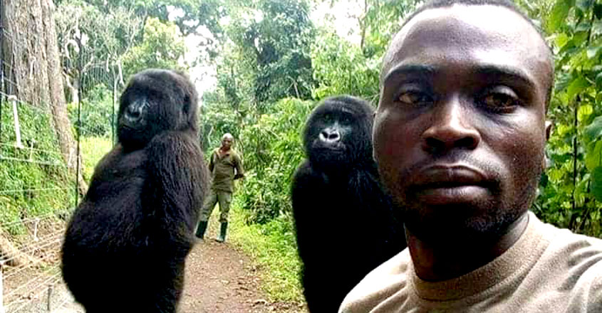 Gorillas Caught in Viral Selfie
