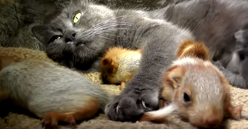 Cat adopts four adorable squirrels