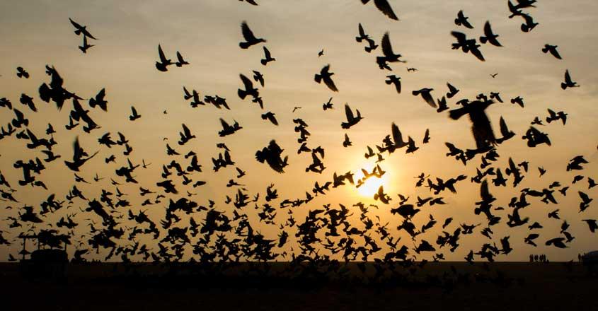 Pigeons on fly at marina beach