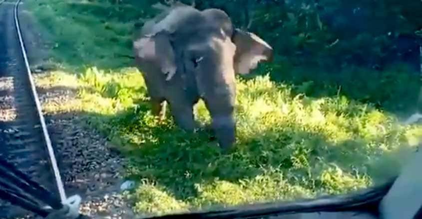 Elephant in Siliguri tries to push train's engine