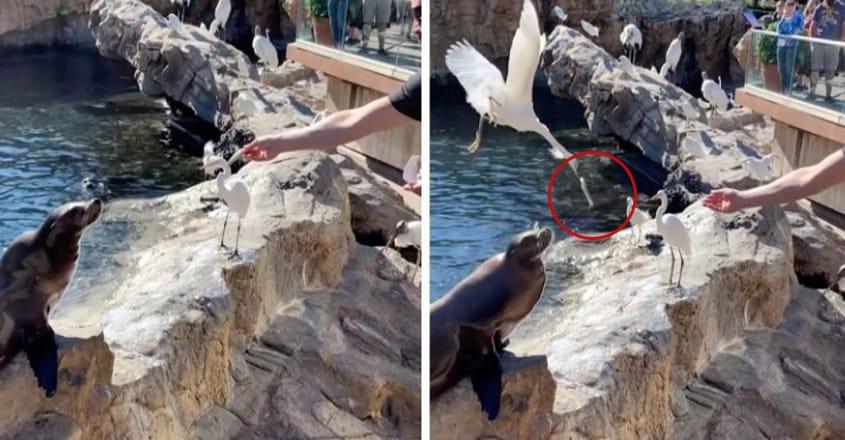 Cheeky Bird Steals Sea Lion's Fish