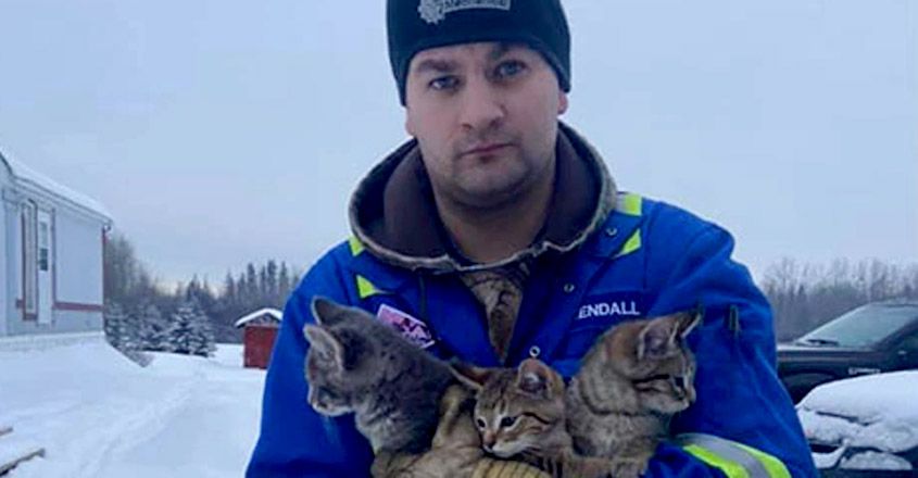 Man Finds 3 Kittens Frozen To Ground, Uses Coffee To Rescue Them