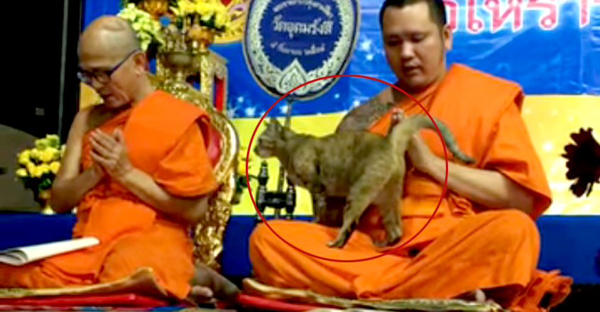 Friendly Cat Tests Buddhist Monk's Patience In This Heartwarming