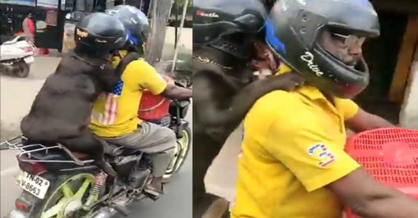 Dog Wearing Helmet During Bike Ride Wins Hearts