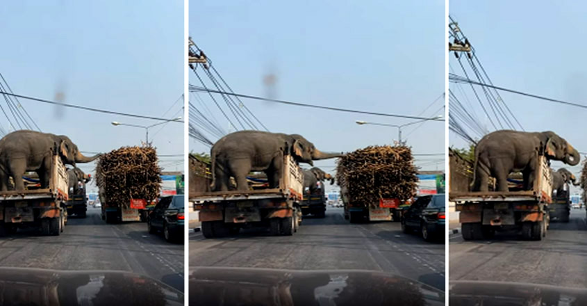 Elephants Grab a Roadside Snack While Stopped