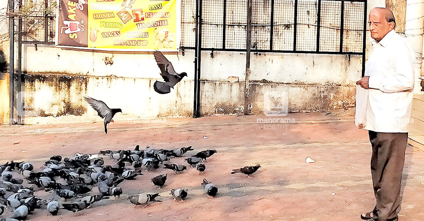 hundreds of pigeons that had been waiting for food