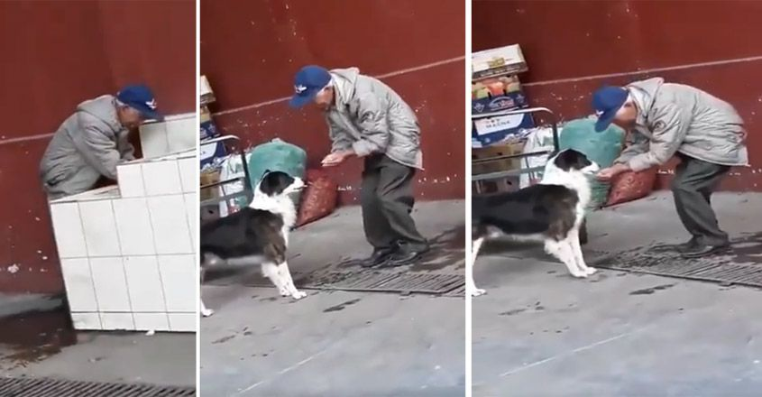 Elderly Man Helps A Dog Drink Water