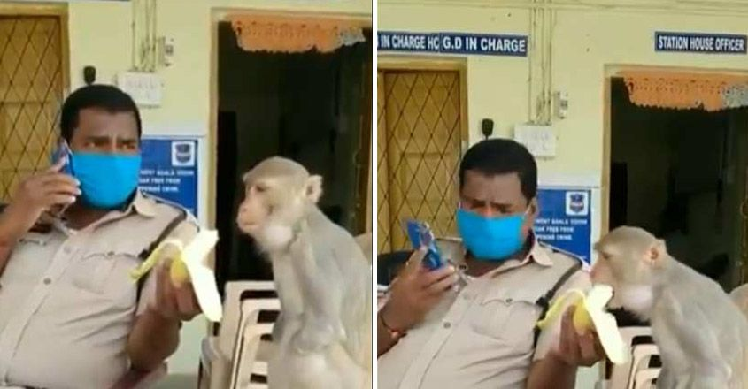 Cop Patiently Feeds Banana To Monkey With No Hands