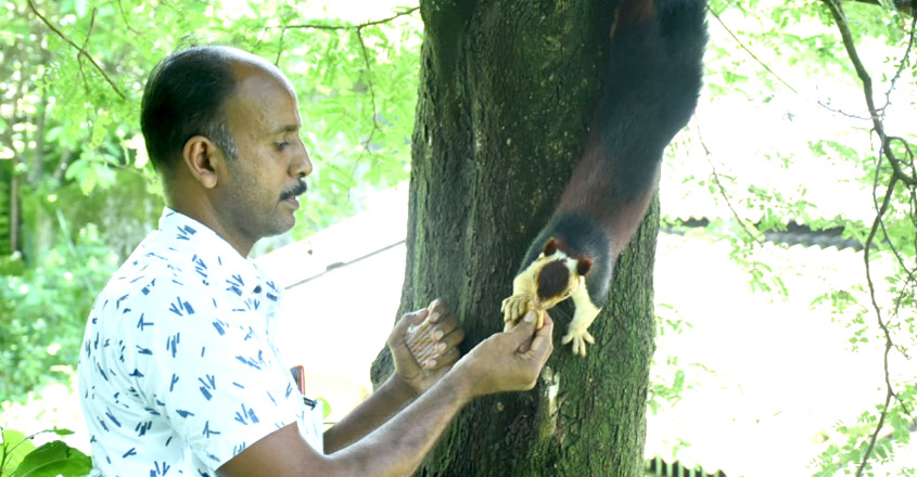 'Muthu' the Indian giant squirreland its tale of unusual friendship with Vinu
