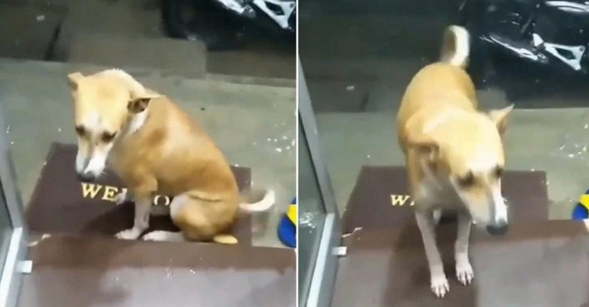 Mumbai shopkeeper offers shelter to street dog during heavy rains