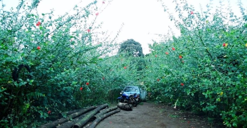 Eldho Pachilakkadan, this one-time architect has turned barren land into a fruit forest