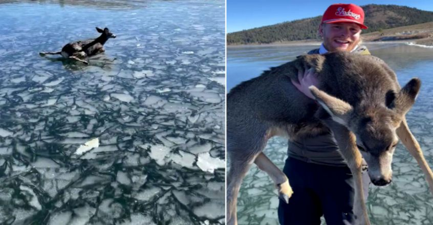 Utah man rescue fawn trapped on thin ice on frozen lake