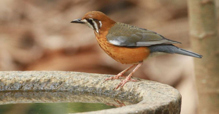 A help to our nature by providing water for birds and animals in Summer