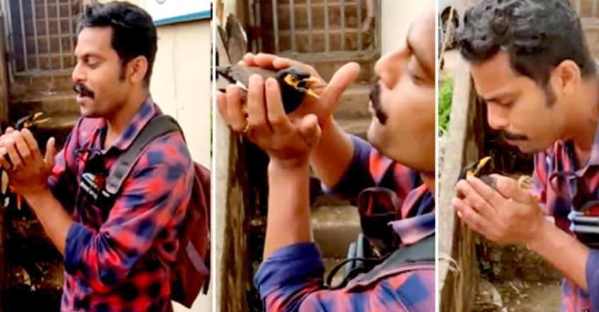 How mans timely intervention saved a electrocuted bird