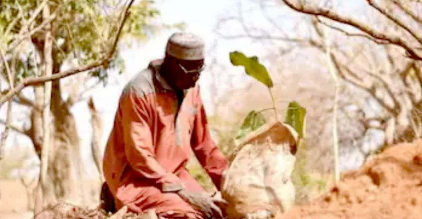 Man who stopped the desert': 70-year-old transforms barren land into forest