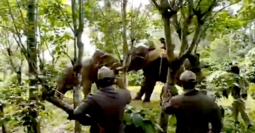 Trained elephant controls a wild tusker in viral video