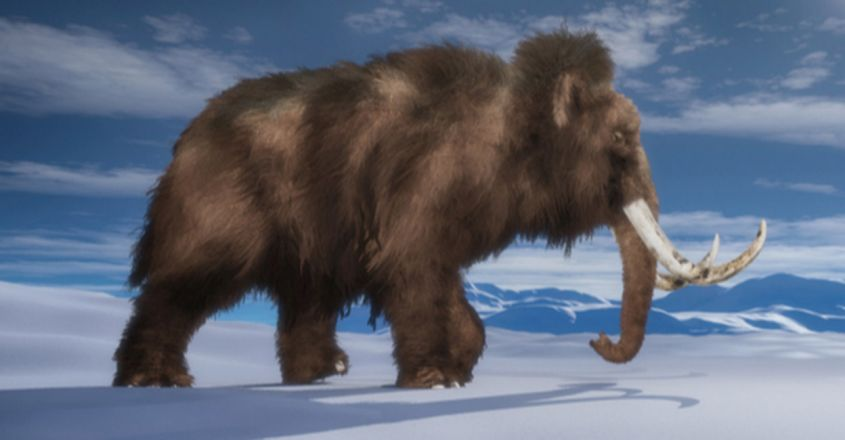 An Ancient Woolly Mammoth Trekked So Far, It Could Have Circled The Globe Twice