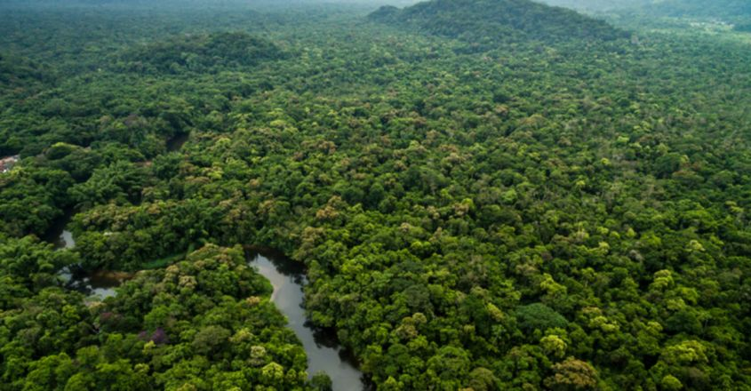 Brazilian couple replants whole forest by growing over 20 lakh saplings of 293 species of trees