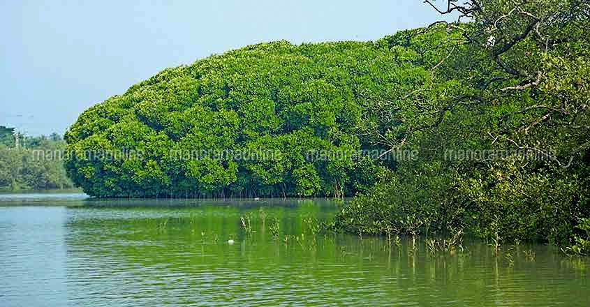 Mangroves Hold Vast Stores of Carbon
