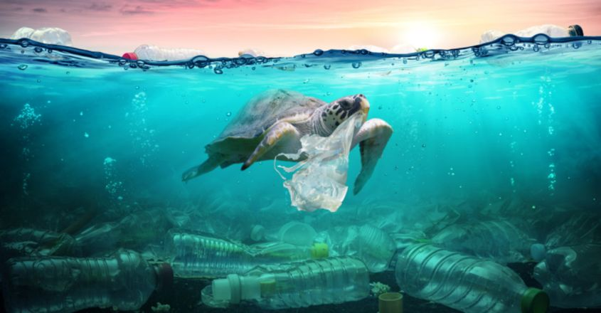 Plastic Pollution Affects Sea Life Throughout the Ocean