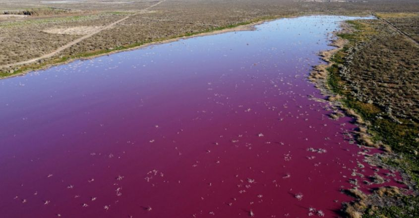Pollution Turns an Argentinian Lake Bright Pink